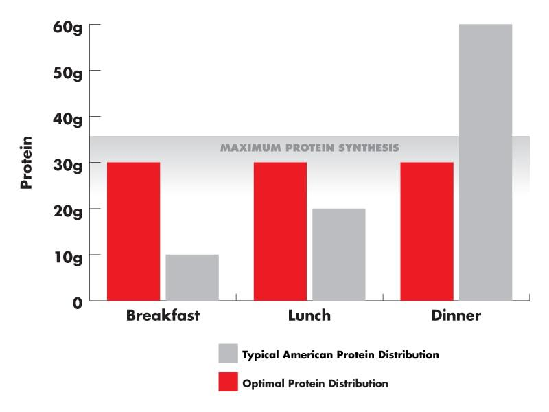 A graph demonstrating Typical American protein Distribution